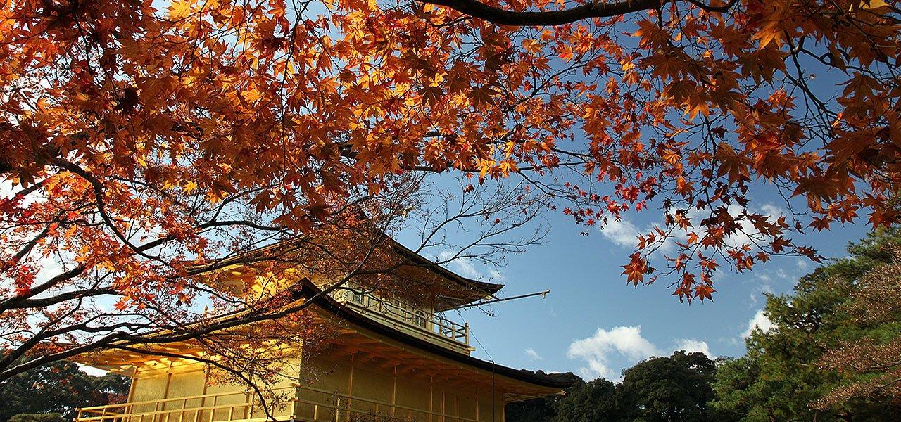 京都紅葉大爆發